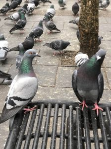 Bird problem - pigeons